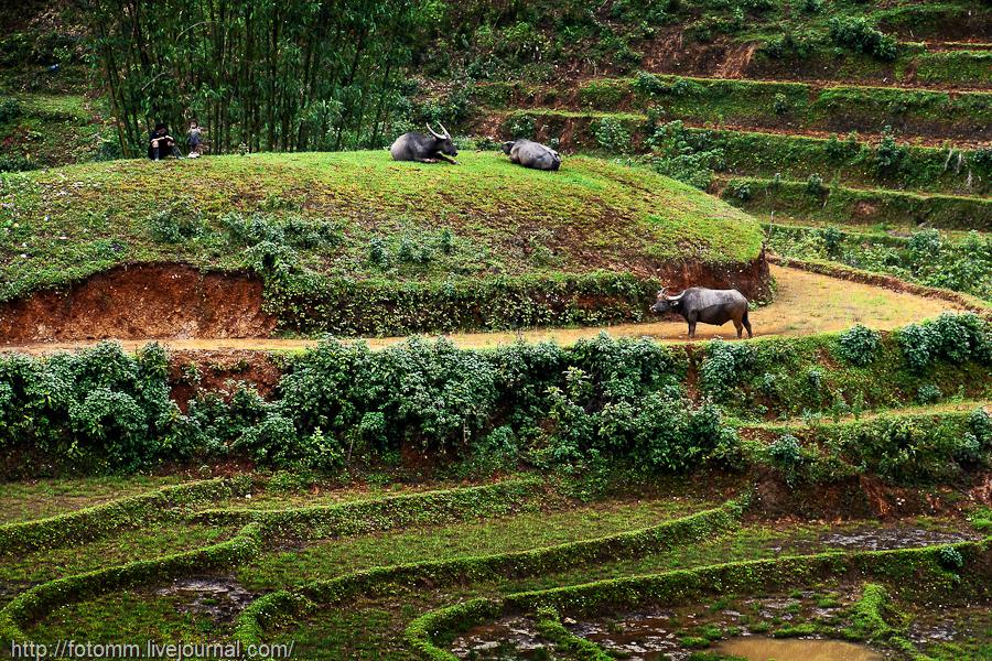 Северный Вьетнам. Сапа и окрестности.
