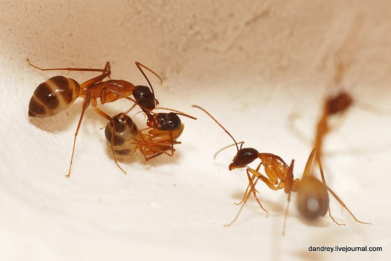 1991 Строительство искусственного муравейника