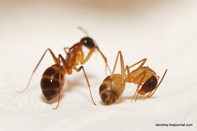 2086 Строительство искусственного муравейника