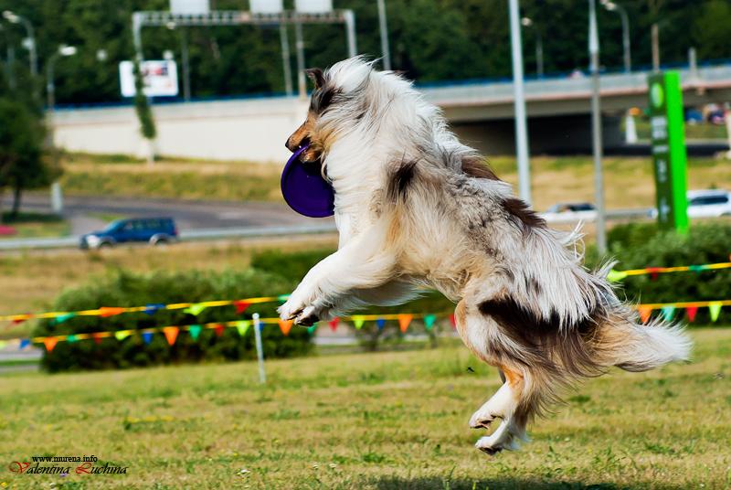 Dog Frisbee. Для клуба Disk Hunters