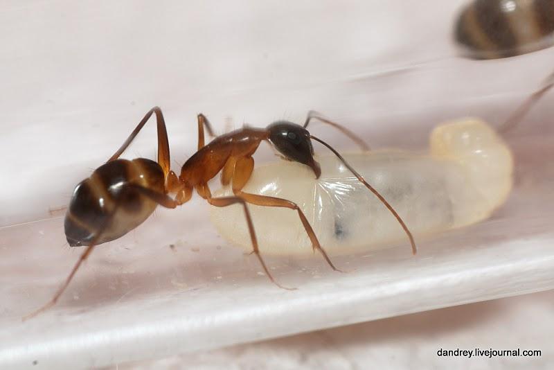 2474 Строительство искусственного муравейника