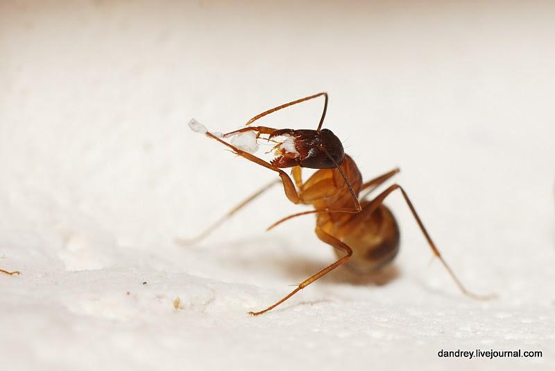 Домашний муравейник (63 фотографии), photo:42.
