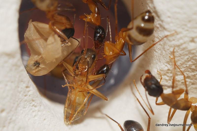 3347 Строительство искусственного муравейника