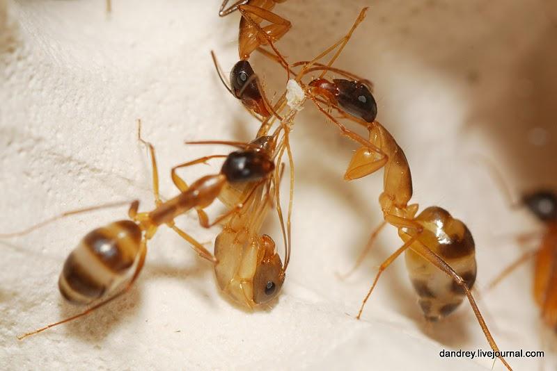 3442 Строительство искусственного муравейника