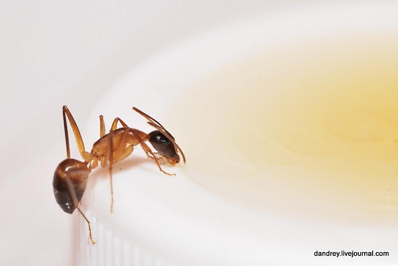 А вы знали что все муравьи в муравейнике - девочки.