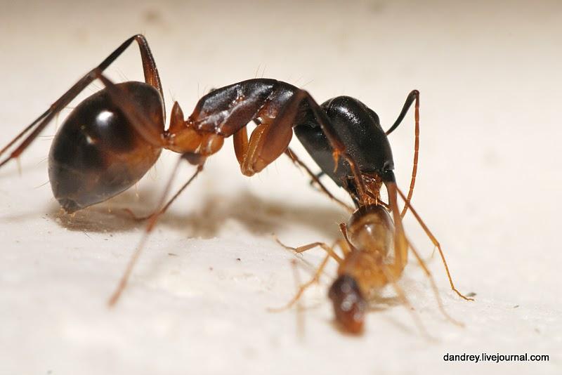 Как я строил муравейник.