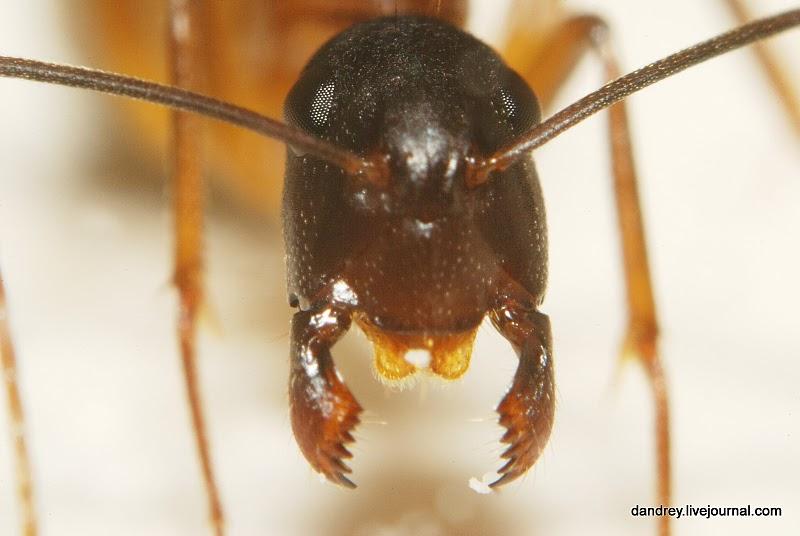 ...муравьи строят свое жилье.