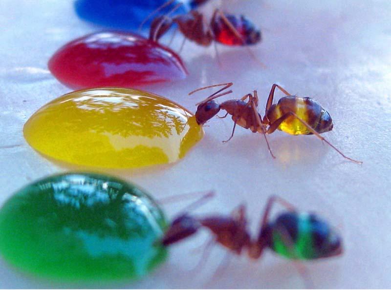 На угощение накинулись муравьи.  Результат вы видите сами. http.