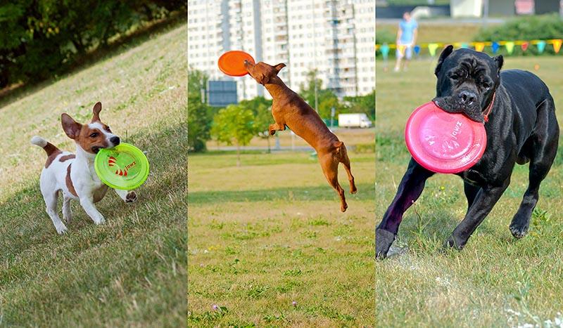 Dog Frisbee: Для клуба Disk Hunters