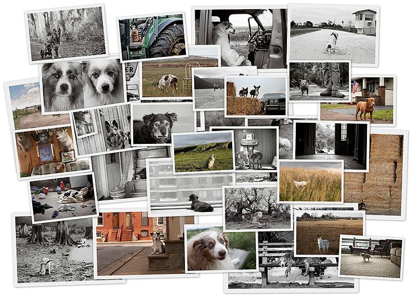 BIGPIC38 Старые собаки Америки