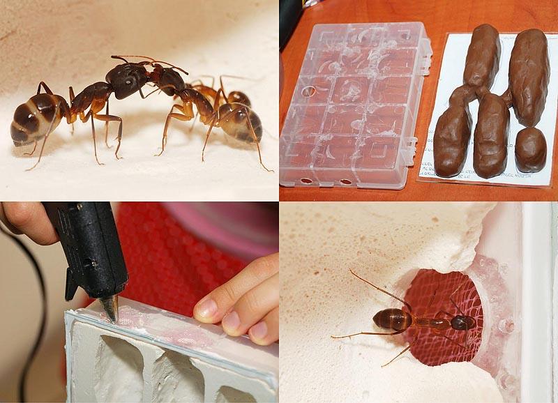 Строительство искусственного муравейника