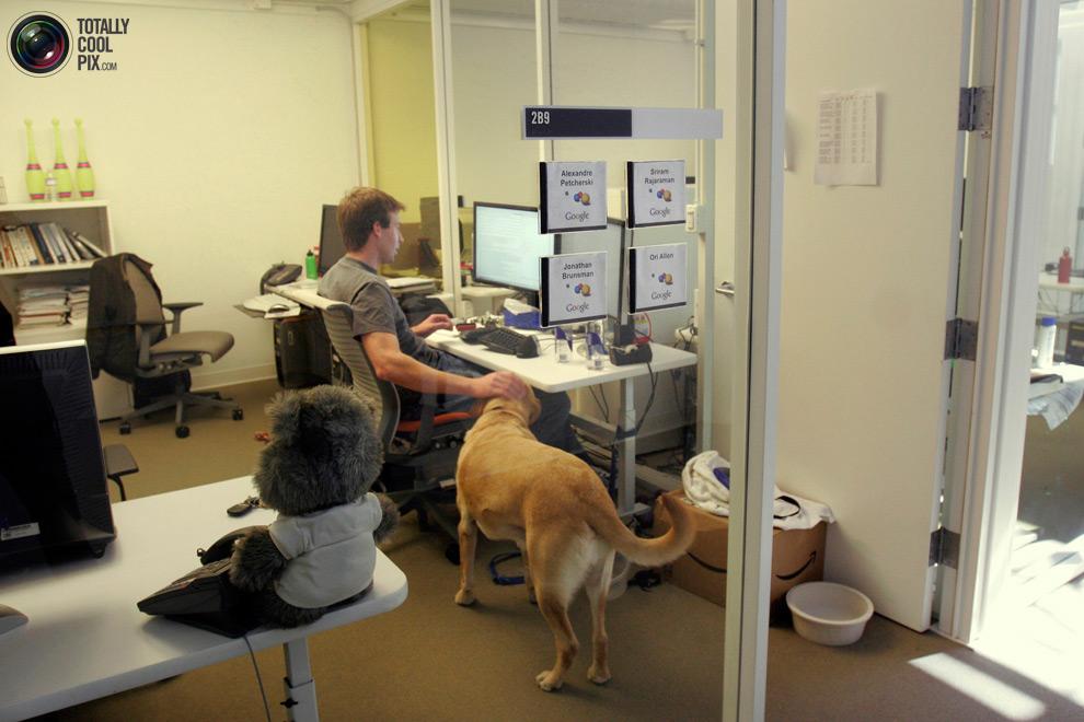 google08 Офис мечты: Работа в компании Google