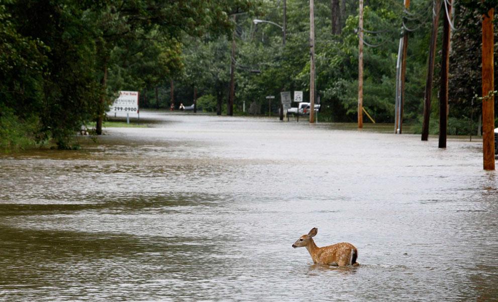 irene15 Ураган Ирэн