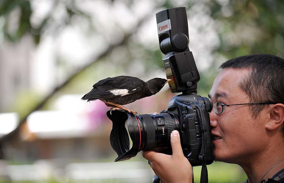 странно, актер камера для фотографирования птичек сих