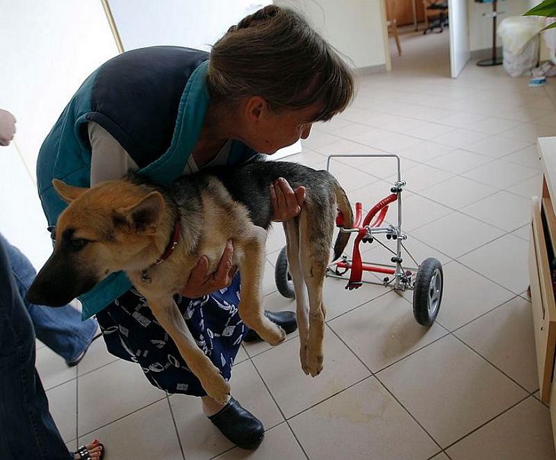 ленты форум как ухаживать за парализованной собакой чего