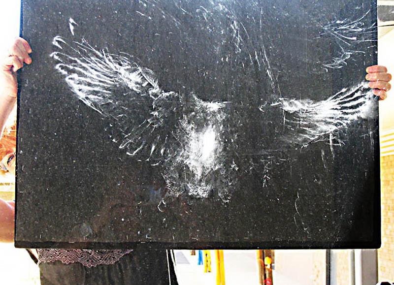 Призрачные отпечатки птиц на стеклах
