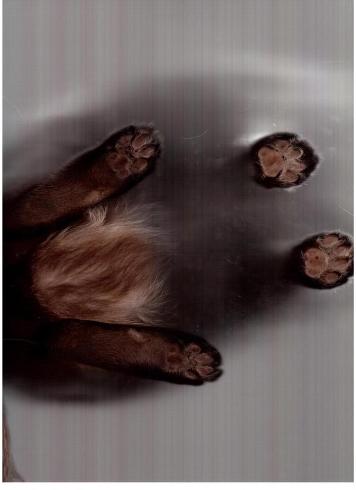 12171 720x990 Отсканированные кошки