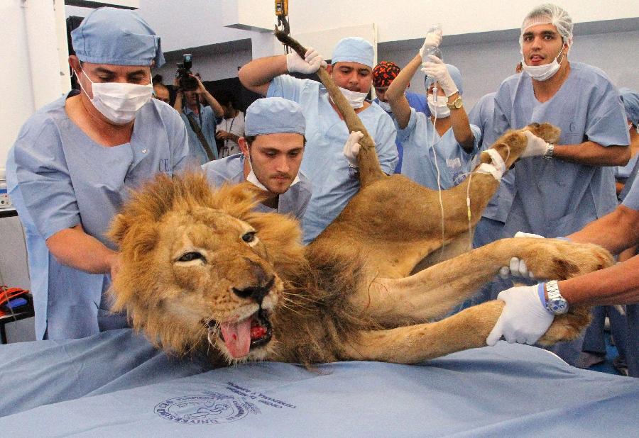 122043526 11n raja binatang di dokter gigi