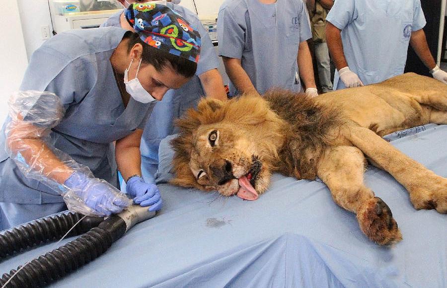 122043526 31n raja binatang di dokter gigi