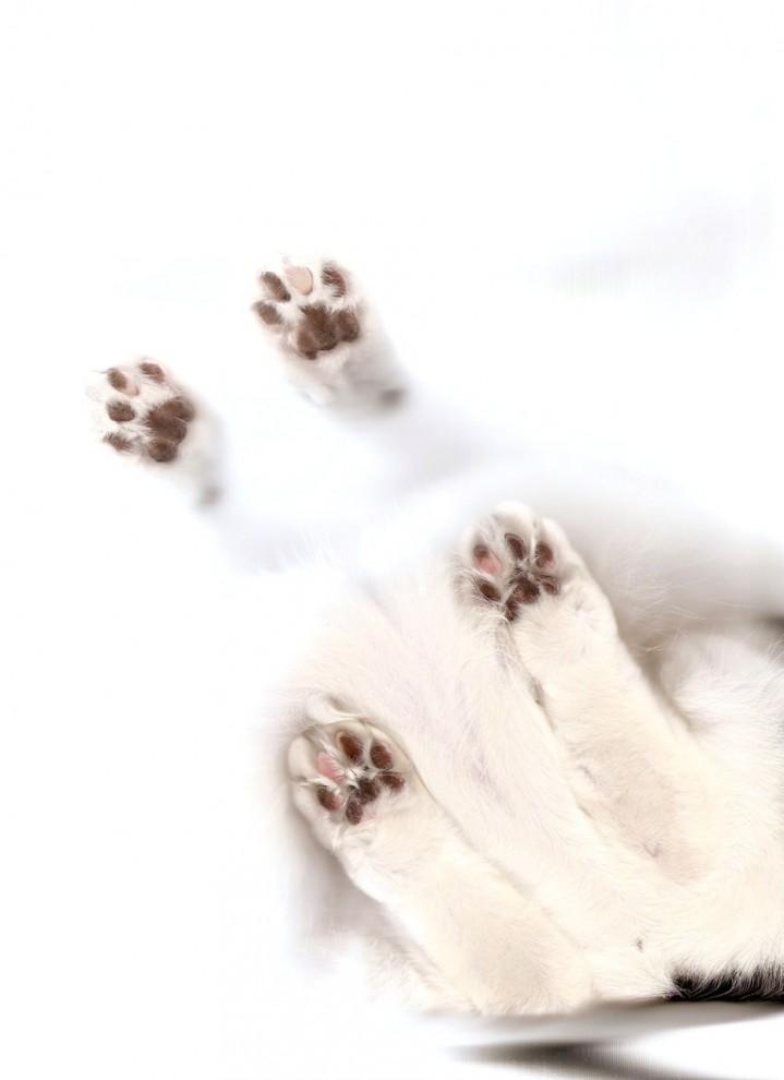 13153 719x990 Отсканированные кошки