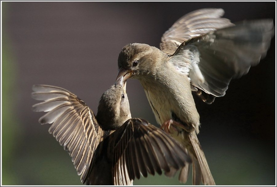 Птичьи разборки от Urs Schmidli