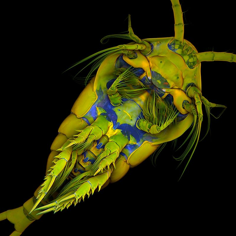 С фотоконкурса «The Nikon Small World Competition»