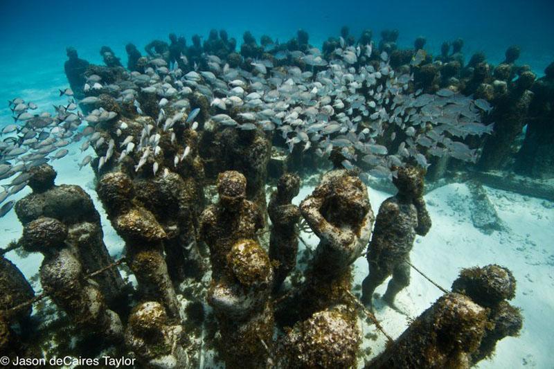 157445 t Подводные скульптуры превращаются в чудеса природы