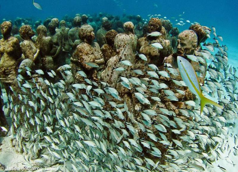 157446 t Подводные скульптуры превращаются в чудеса природы