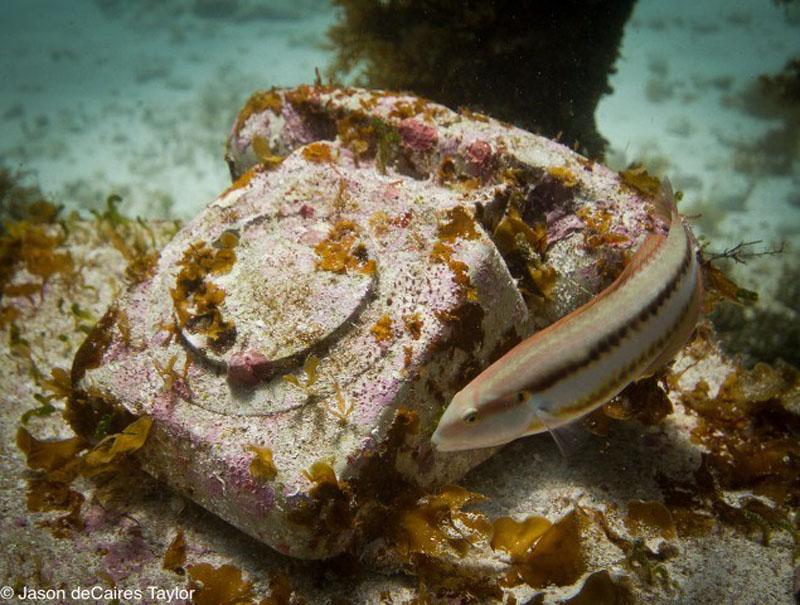 157449 t Подводные скульптуры превращаются в чудеса природы