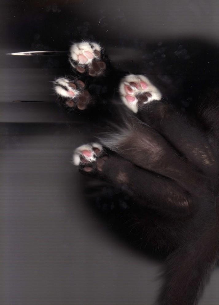 18112 713x990 Отсканированные кошки