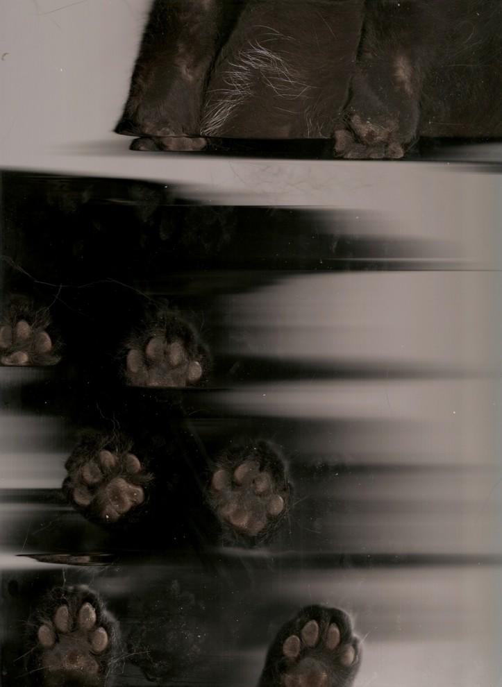 Большие голые попки письки сиськи