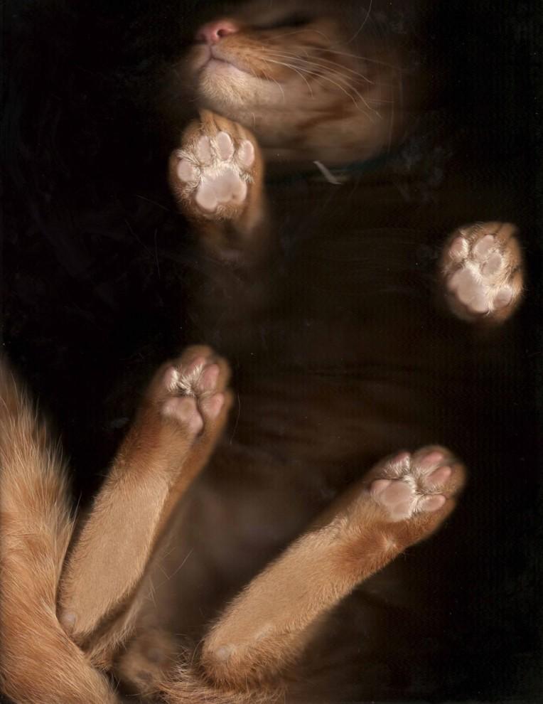 24102 764x990 Отсканированные кошки