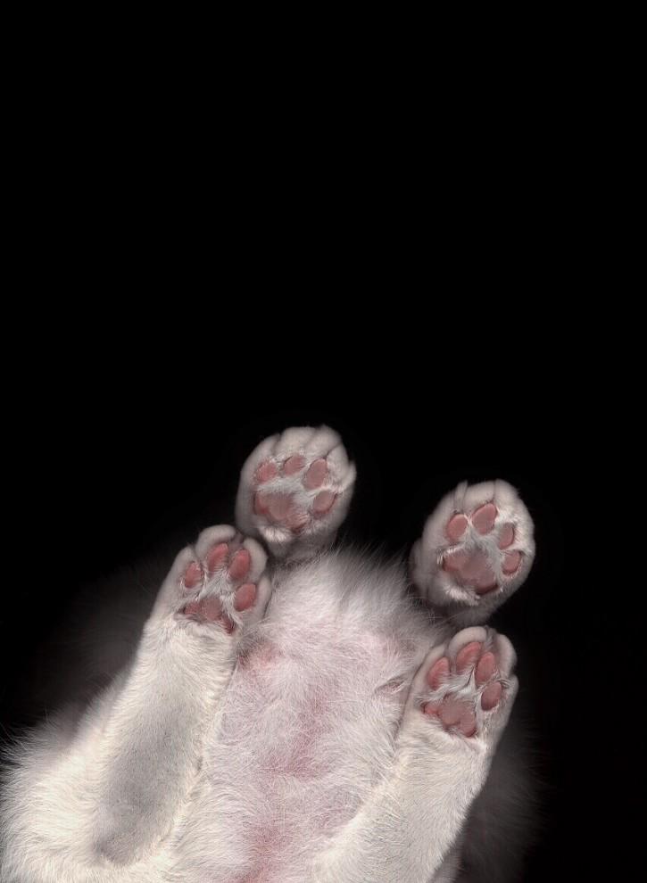 2503 725x990 Отсканированные кошки