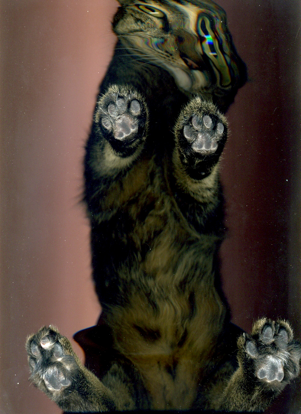 2780 Отсканированные кошки