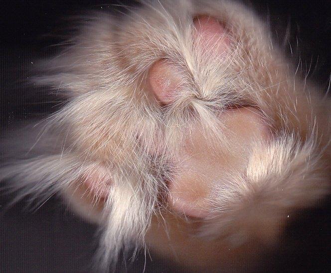 3366 Отсканированные кошки