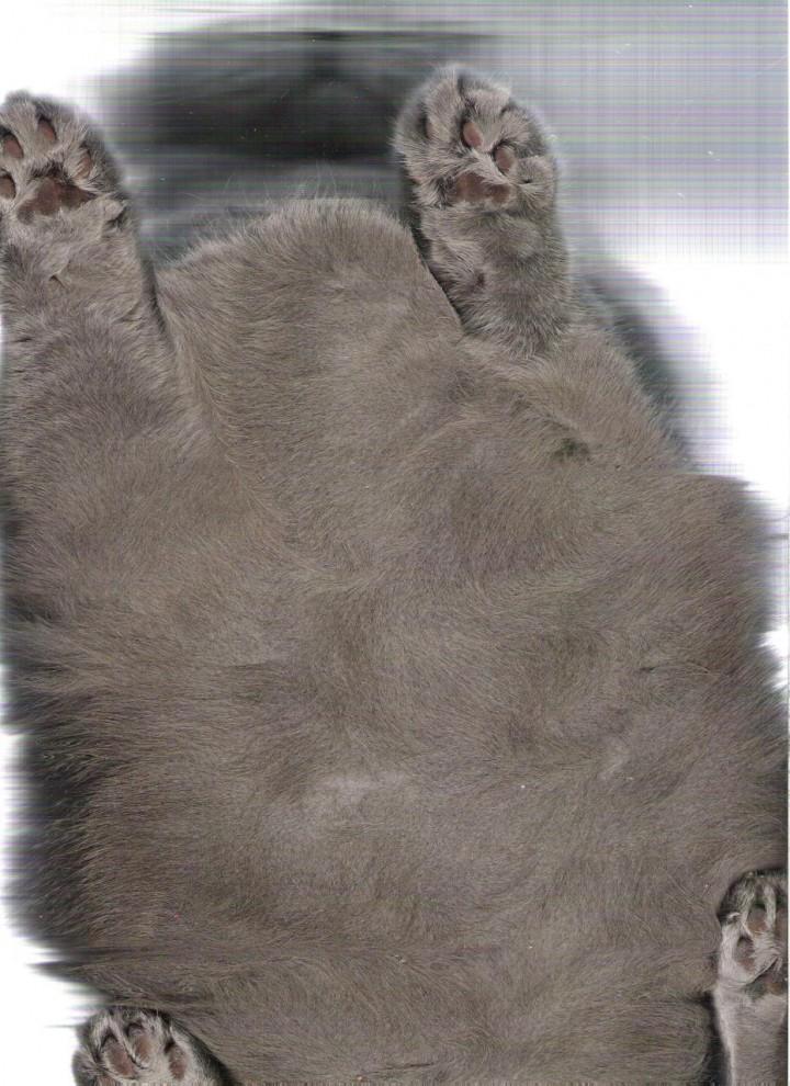 4262 720x990 Отсканированные кошки