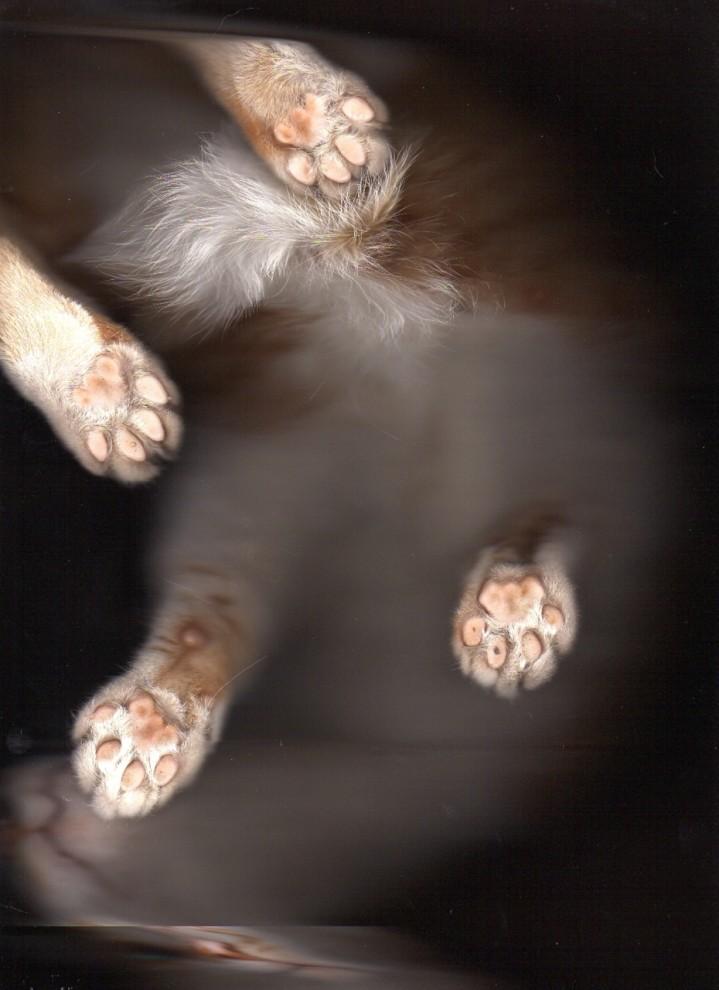 5208 719x990 Отсканированные кошки