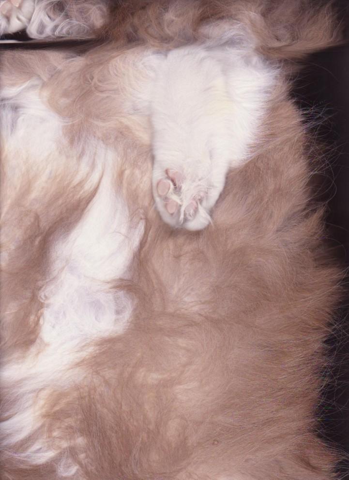 7173 721x990 Отсканированные кошки