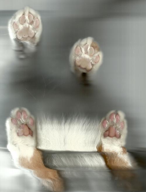 8163 Отсканированные кошки