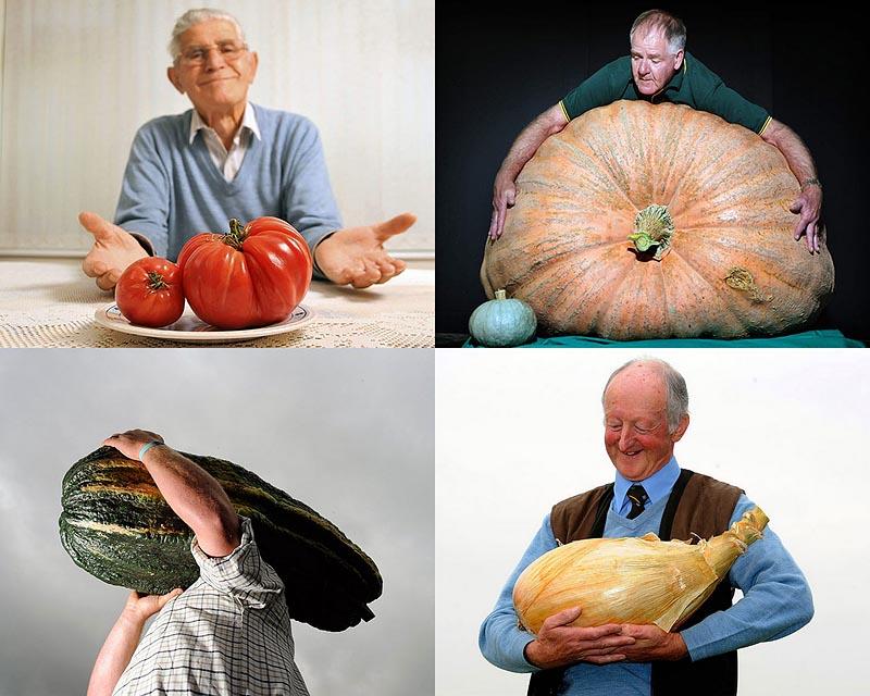 BIGPIC130 Гигантские овощи