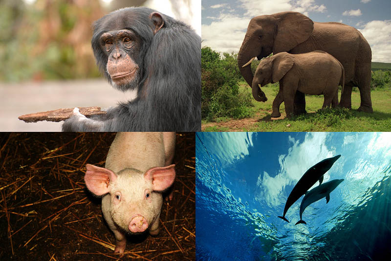 BIGPIC152 Десятка самых умных представителей мира животных