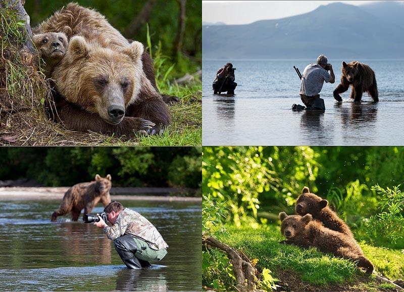 BIGPIC20 Медведи на Камчатке