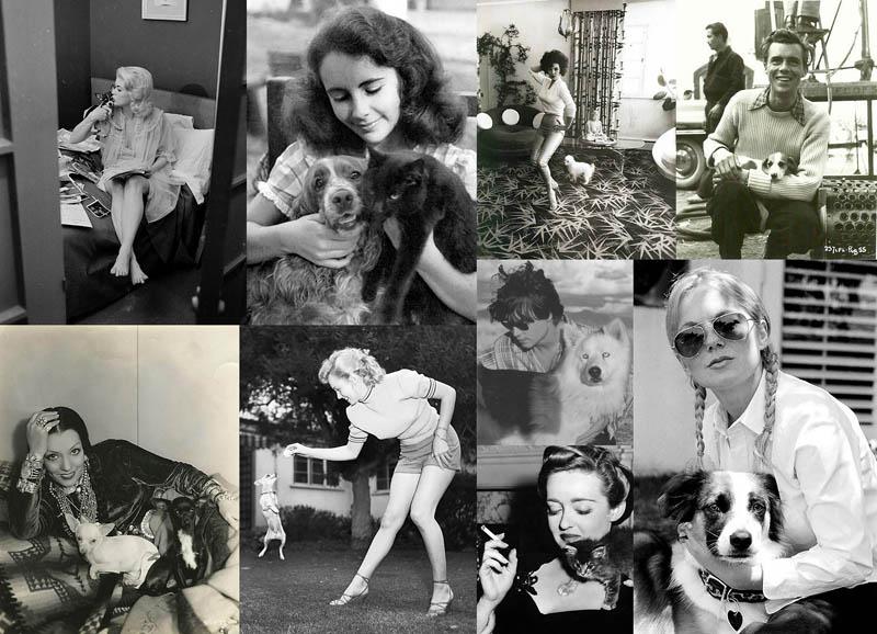 BIGPIC63 Celebridades con sus cuatro mascotas