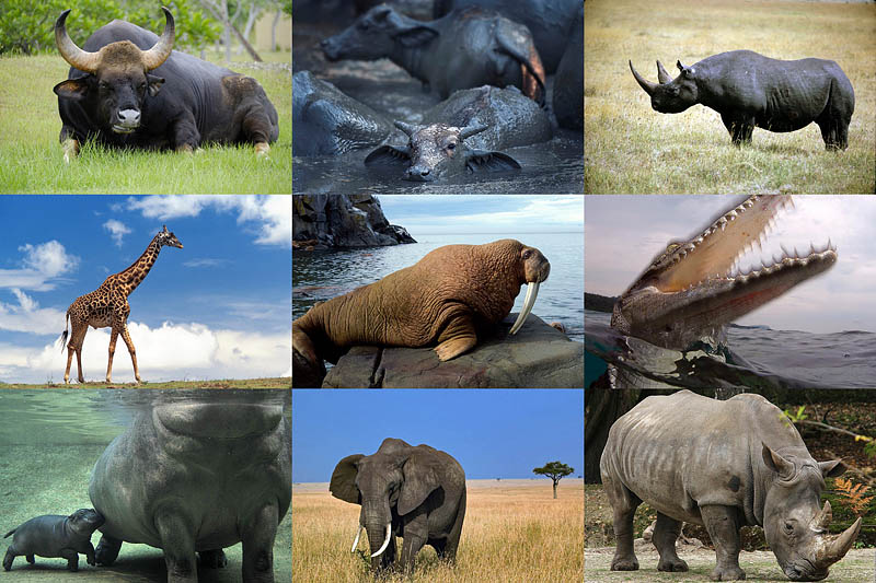 Большие животные мира