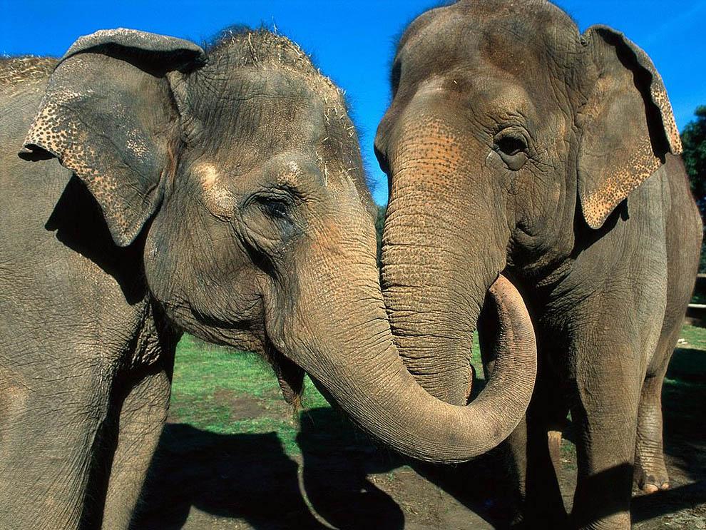 Top 10 animals02 hewan darat terbesar di dunia