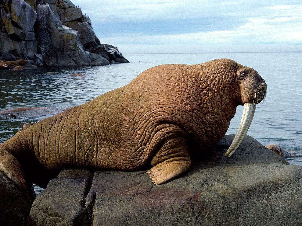 Top 10 animals06 hewan darat terbesar di dunia
