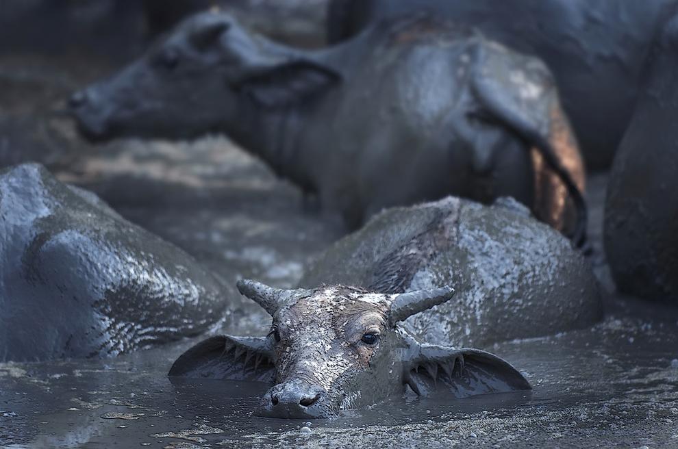 Top 10 animals10 hewan darat terbesar di dunia