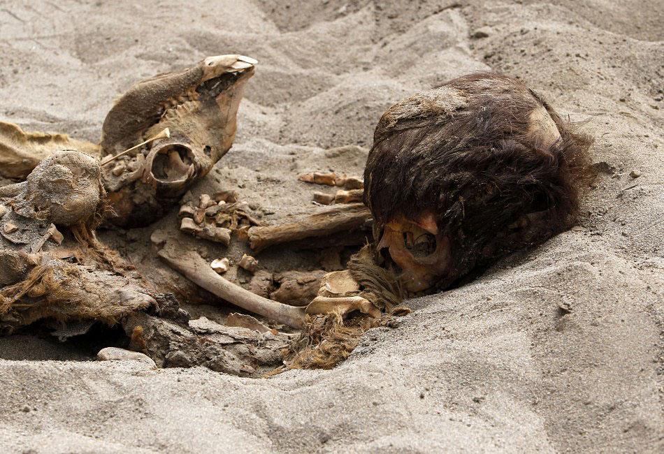bones06 Di Peru, menemukan sisa-sisa anak-anak dikorbankan