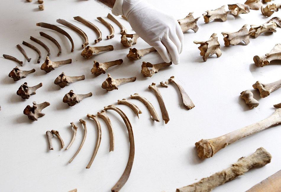 bones09 Di Peru, menemukan sisa-sisa anak-anak dikorbankan