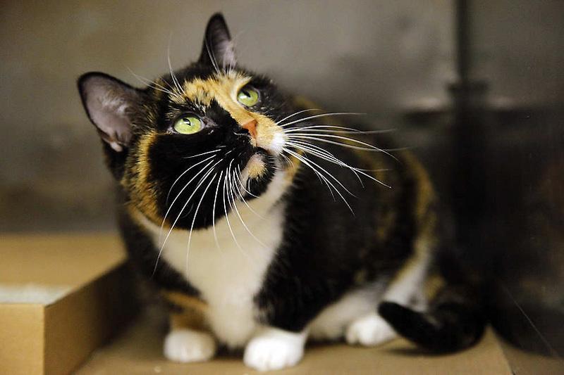 Кошка путешественница за 5 лет добралась из Колорадо в Нью Йорк